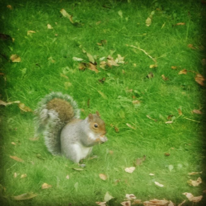 garden squirrel file image PJ