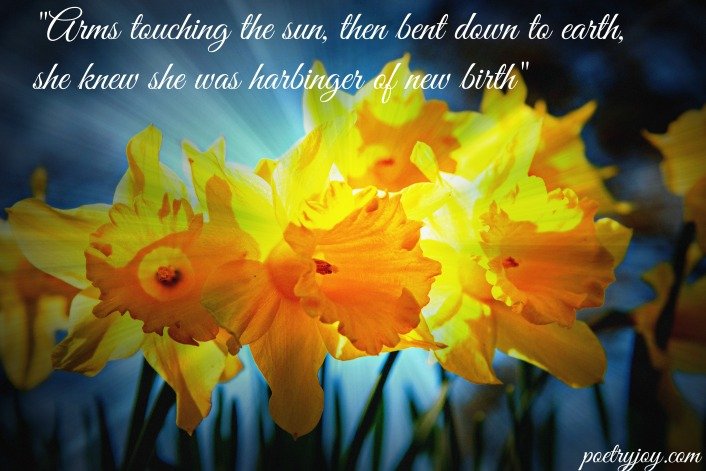 daffodils in Spring PJ file pin image