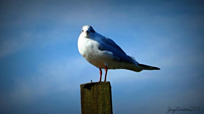 bird at blakeney quay - PJ file