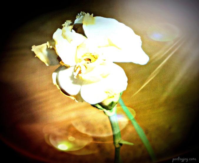 all beauty fades PJ poem image 1