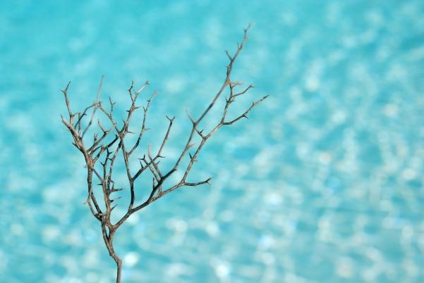 bare twig ~ morguefile image