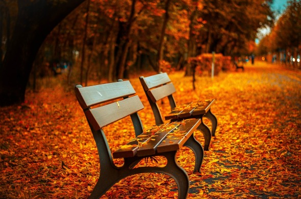 autumnal bench