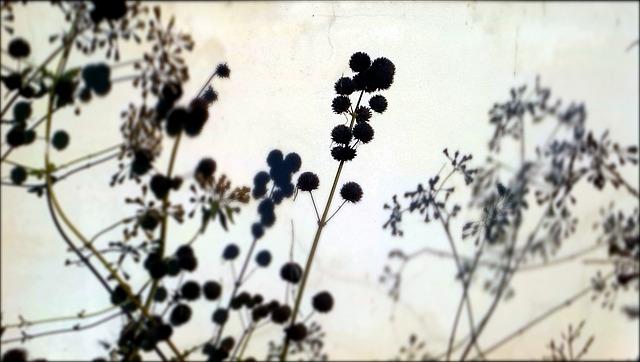 dark seeds