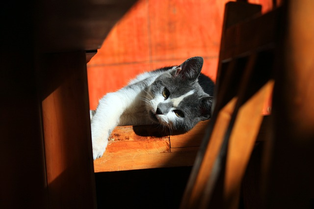 cat- yielding to rest PJ