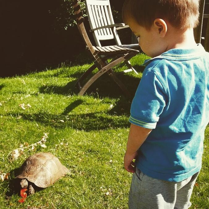elliott-meets-a-tortoise