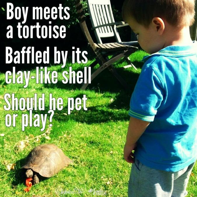 haiku-boy-meets-tortoise