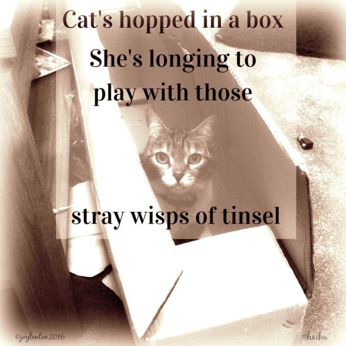 haiku-cat-in-a-box-pj