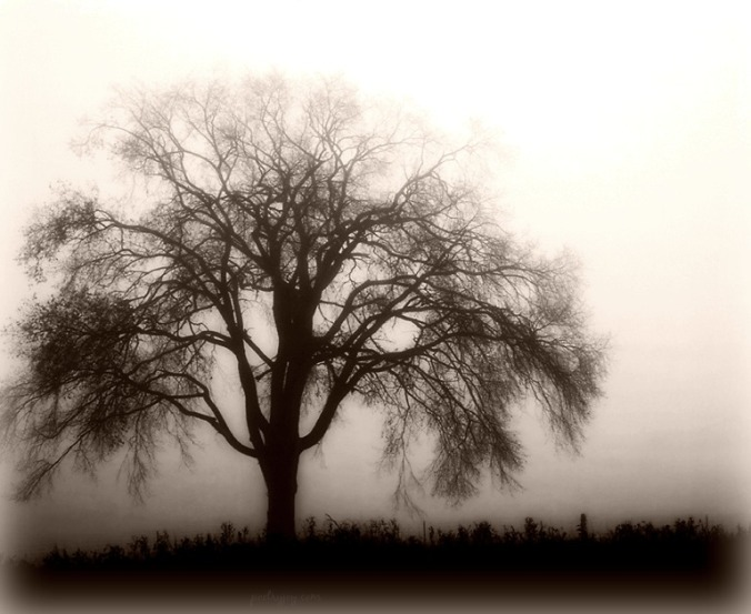 rest-seeking-to-enjoy-the-stillness-pj