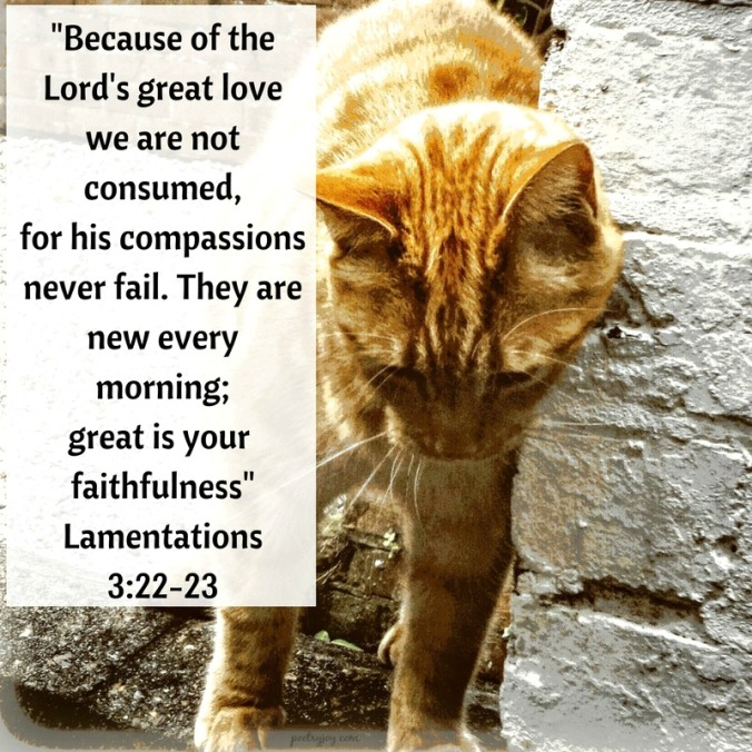 change-cats-whiskers-faith-trust-lamentations-3-22-23-pj