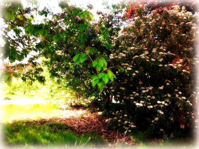 worship-softly-resting-under-loves-soft-shade-pj