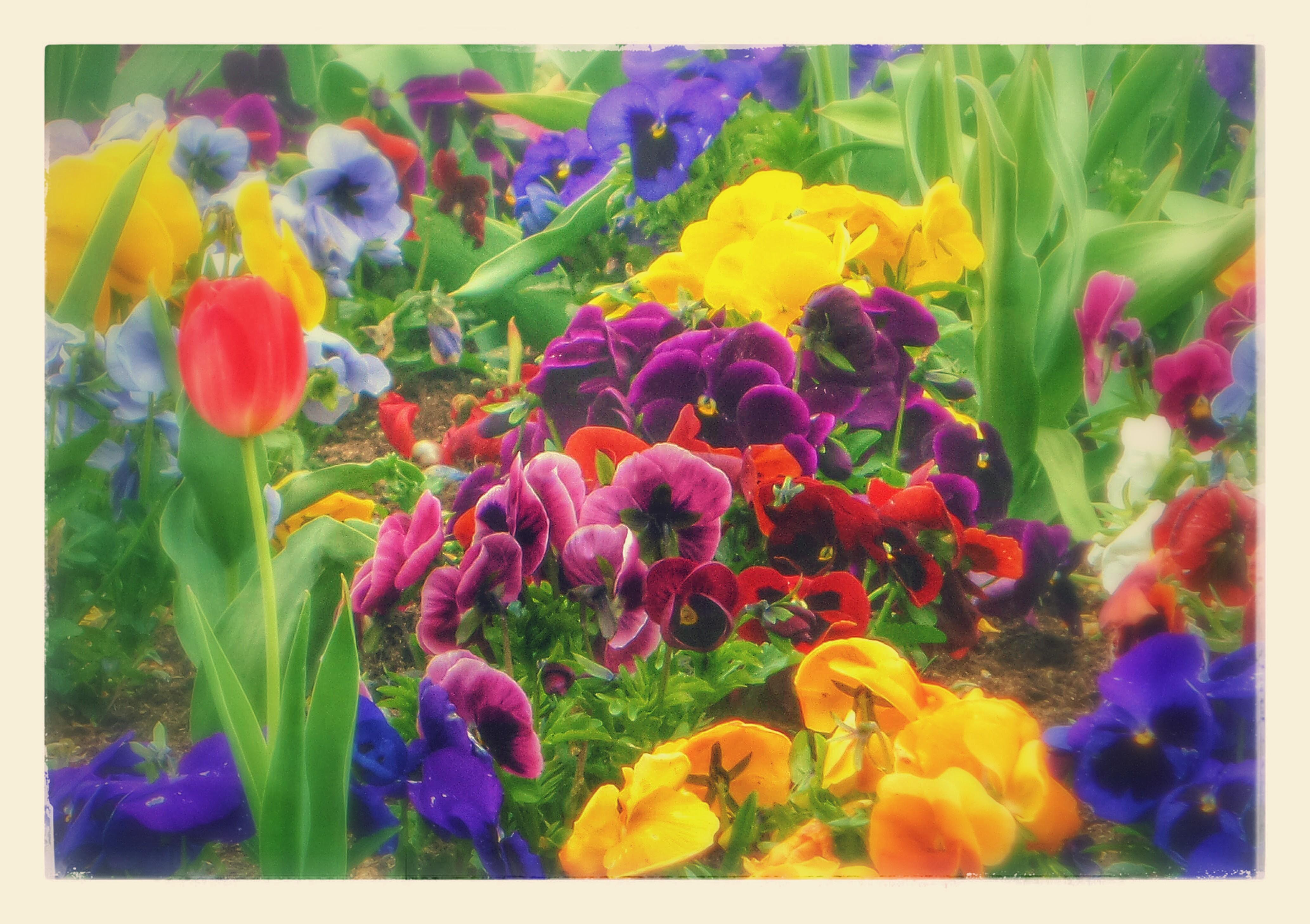 Blue Spring To Summer Flowers C Joylenton Poetryjoy