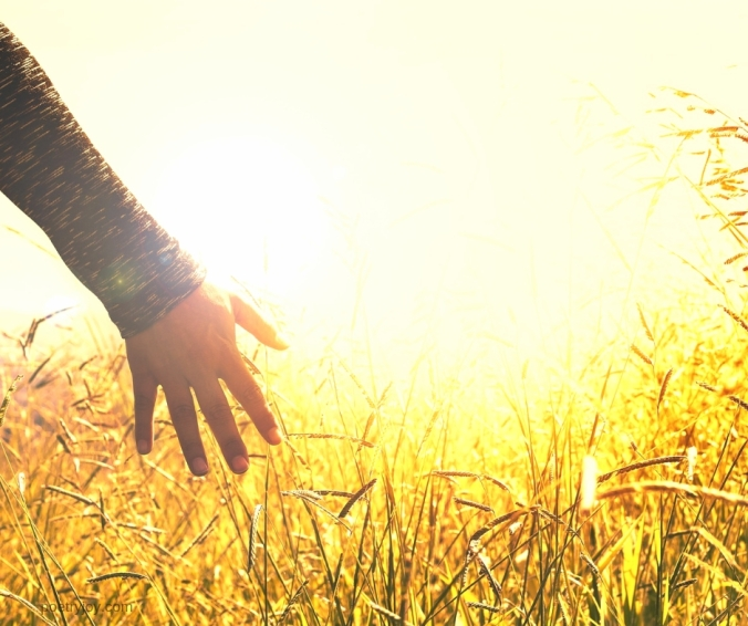 hand touching a wheat field - touch - @poetryjoy.com