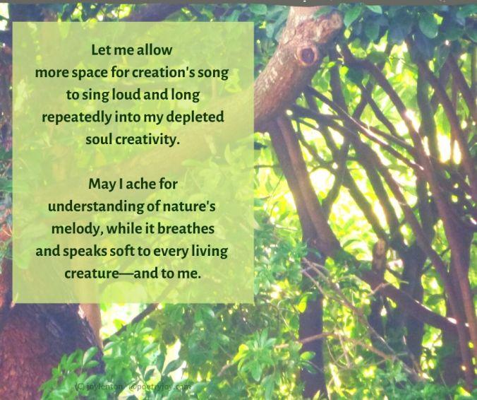 melody - trees - leaves - sunlight - nature's melody poem excerpt (C) joylenton @poetryjoy.com