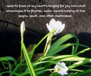 window - wildflowers - I seek to focus on my heart's longing for joy quote (C) joylenton @poetryjoy.com
