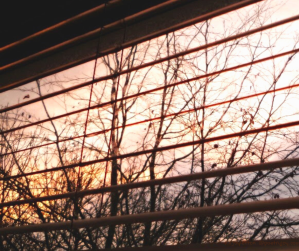 window - blinds - sunset - trees - what your longings and feelings might be saying to you - (C) joylenton @poetryjoy.com