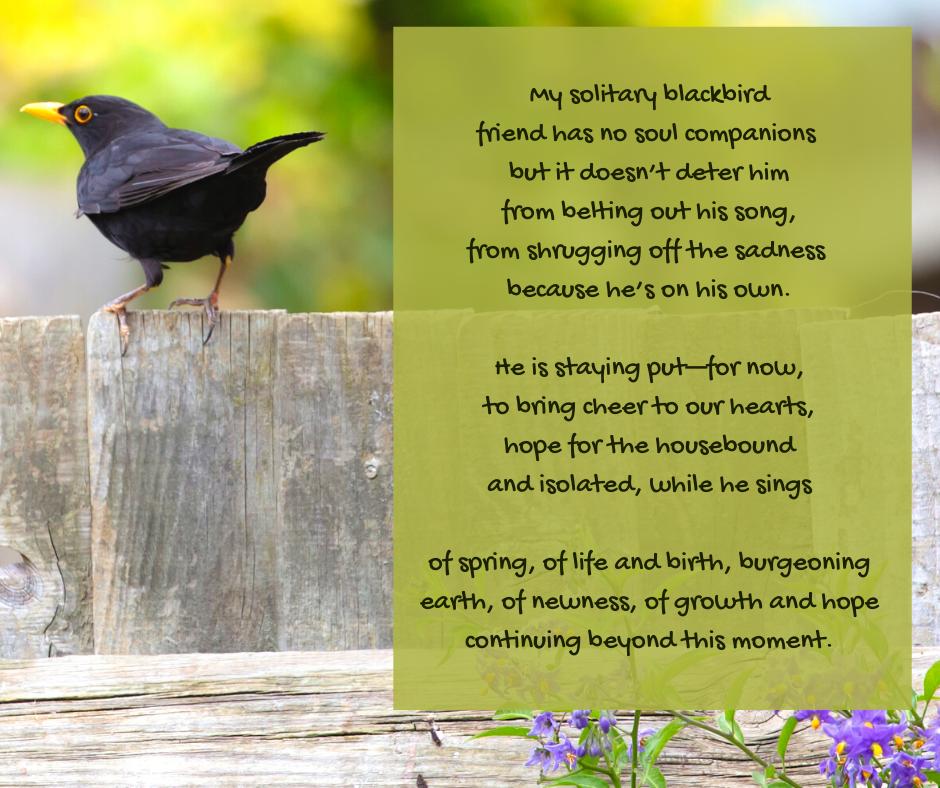 hope - blackbird on a garden fence - notes of hope poem excerpt (C) joylenton @poetryjoy.com