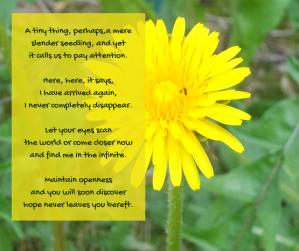 hope - solo dandelion - garden - finding hope poem excerpt (C) joylenton @poetryjoy.com