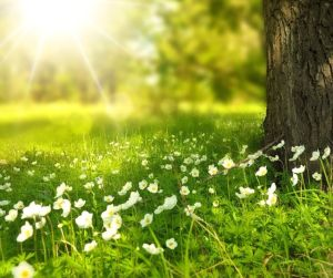 light - how holy light lifts, heals and strengthens us (C) joylenton @poetryjoy.com