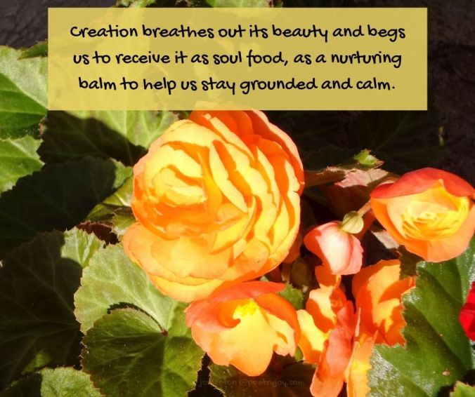 reality - red and yellow begonias - Creation breathes out its beauty quote (C) joylenton @poetryjoy.com