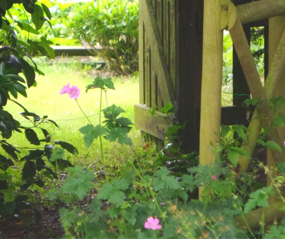 reality - garden - flowers - gate - every acreage in the changing landscape holds a legacy - (C) joylenton @poetryjoy.com