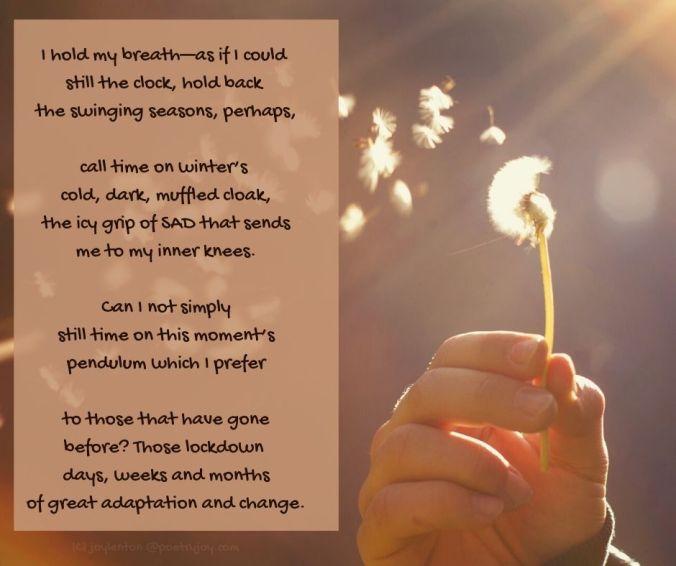 stilling - dandelion clock - stilling poem excerpt (C) joylenton @poetryjoy.com