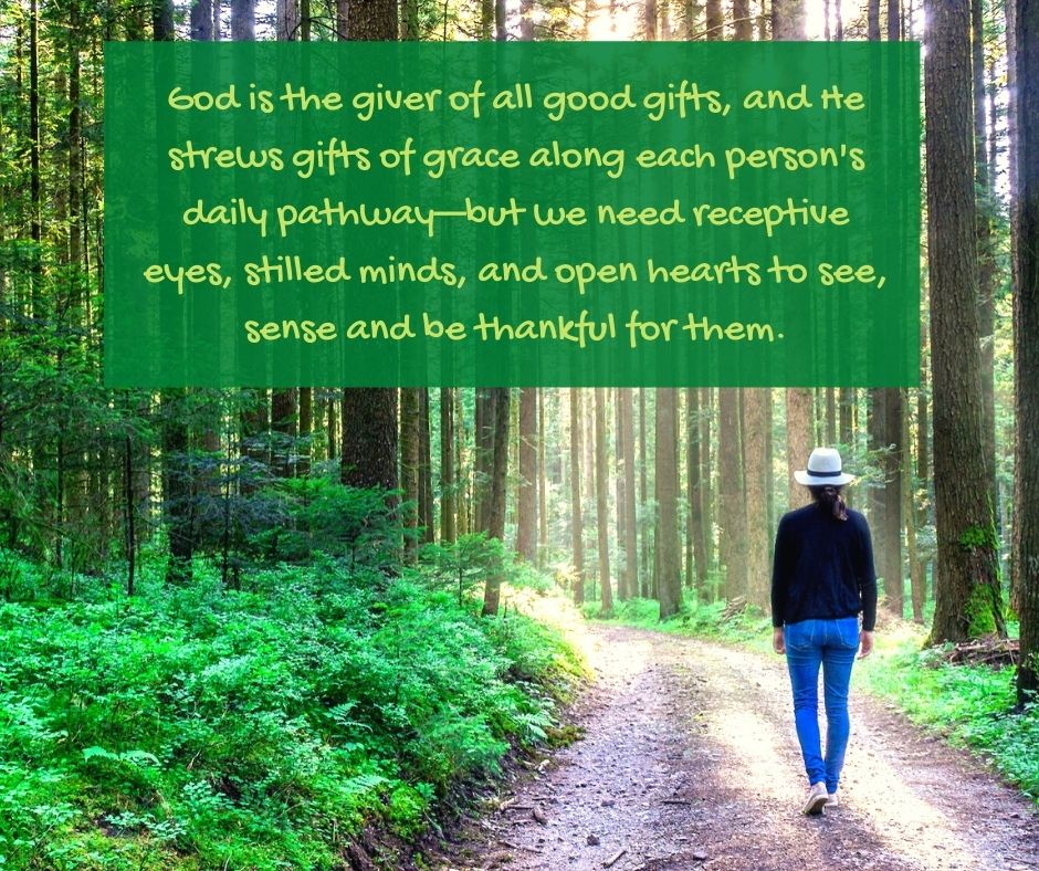 stilling - forest - trees - God is the giver of all good gifts quote (C) joylenton @poetryjoy.com