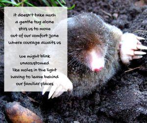 courage - emerging mole - courage poem excerpt (C) joylenton @poetryjoy.com