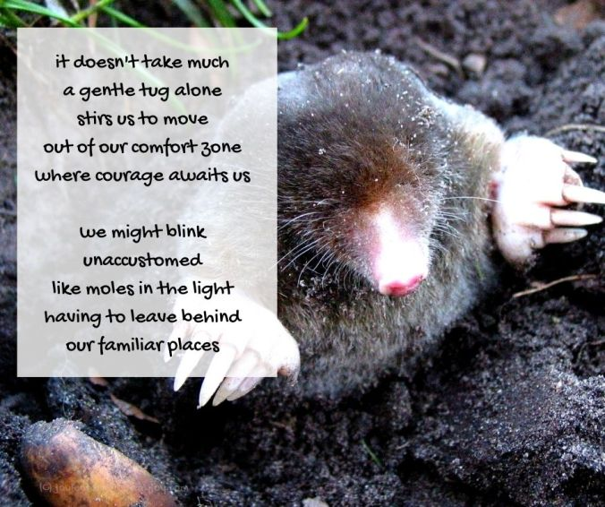 courage - emerging mole - courage poem excerpt (C) joylenton @poetryjoy.com